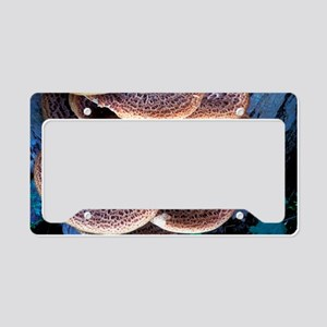 Dryad's saddle fungi License Plate Holder